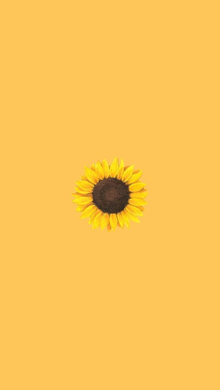 aesthetic aestheticwallpaper iphonewallpaper iphone Aesthetic 750x1331