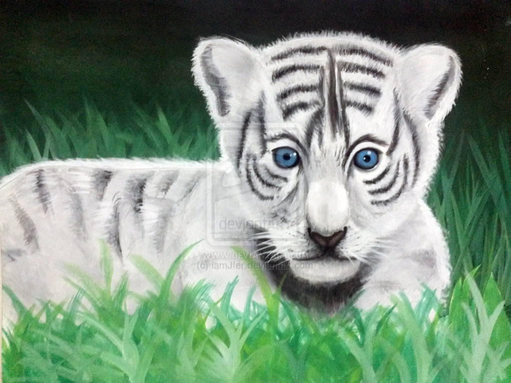 Free Download Baby White Tigers With Blue Eyes Wallpapers Blue Eyed Baby White Tiger 1024x768 For Your Desktop Mobile Tablet Explore 72 Baby White Tiger Wallpaper Tiger Wallpaper Cool
