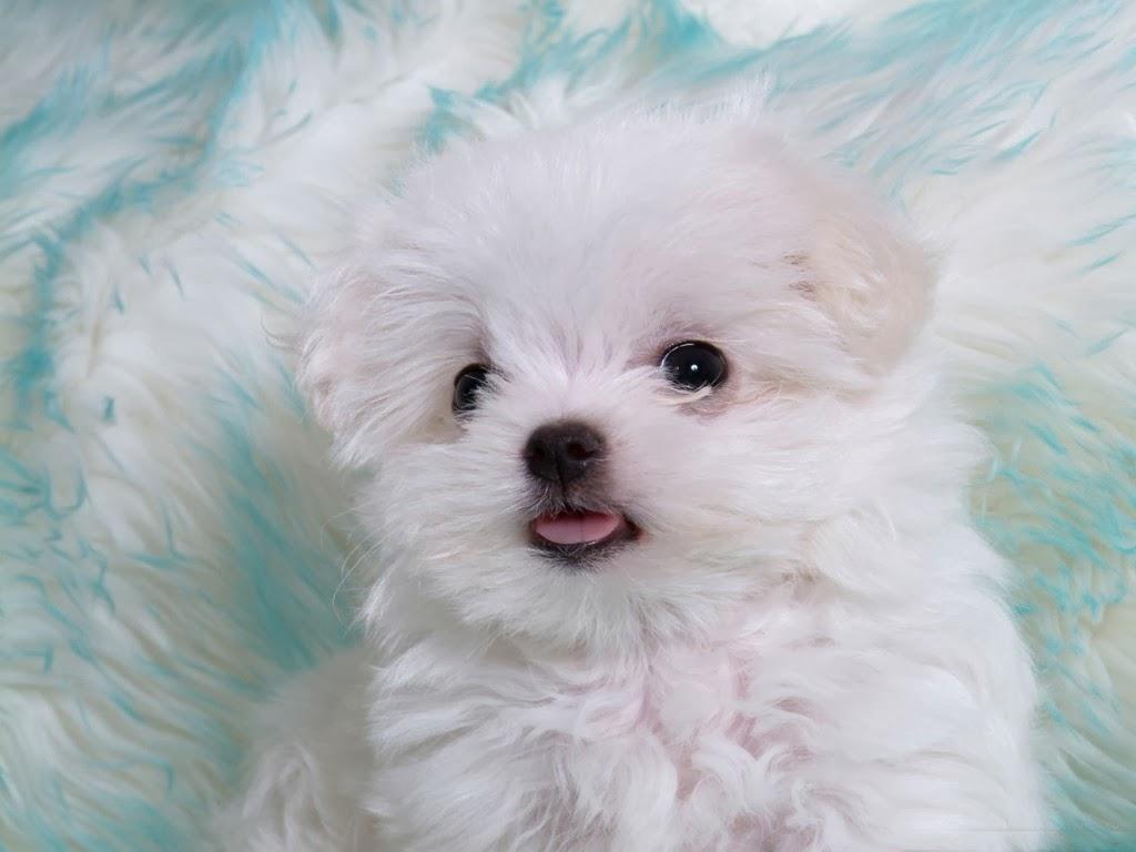 Beautiful HD puppies Dogs wallpapers   beautiful desktop wallpapers 1024x768