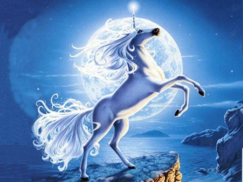 White Unicorns Wallpaper 800x600 White Unicorns Horses 800x600