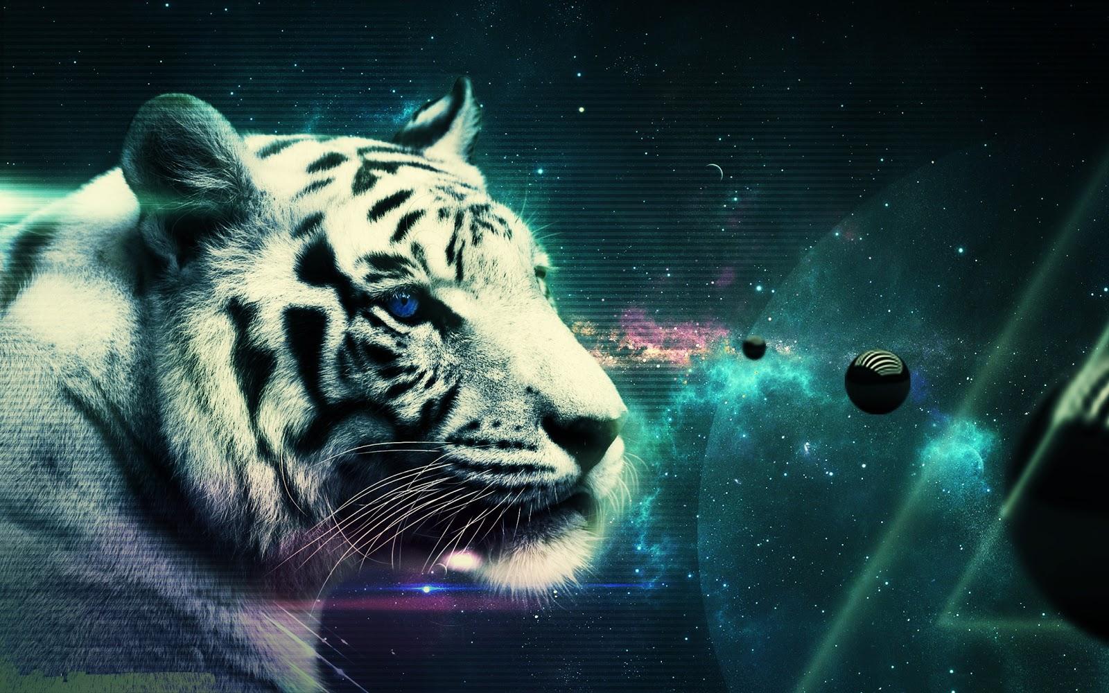 white tigerbeautiful tigerhd tiger imagessleeping tiger high 1600x1000
