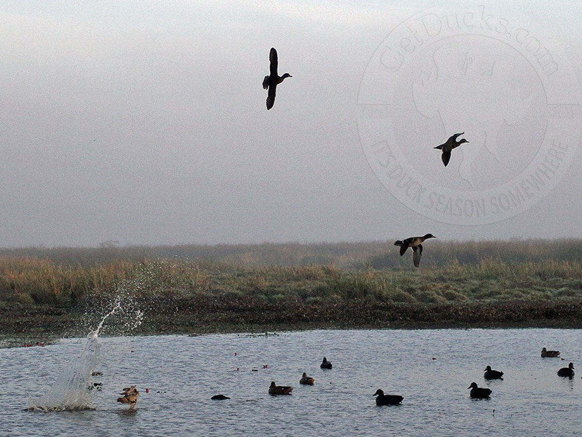 bird hunting backgrounds Car Pictures 1152x864