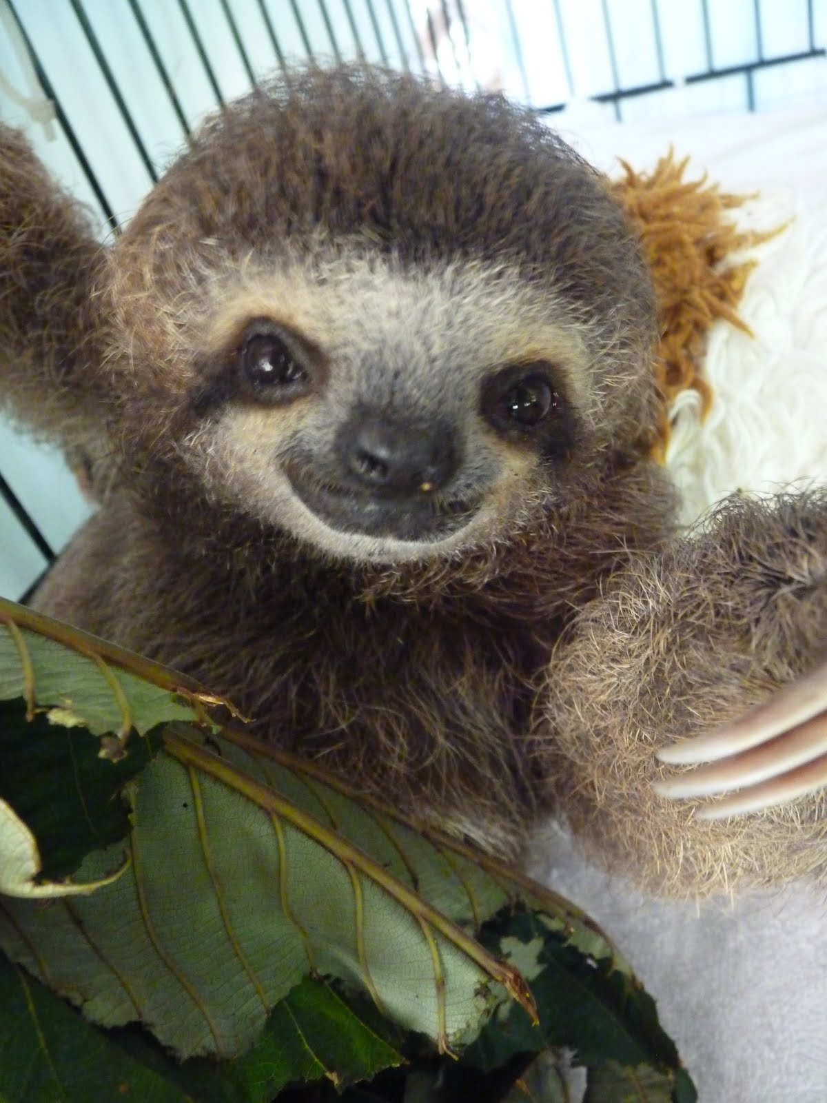 45 funny sloth wallpaper on wallpapersafari - Funny sloth pics ...