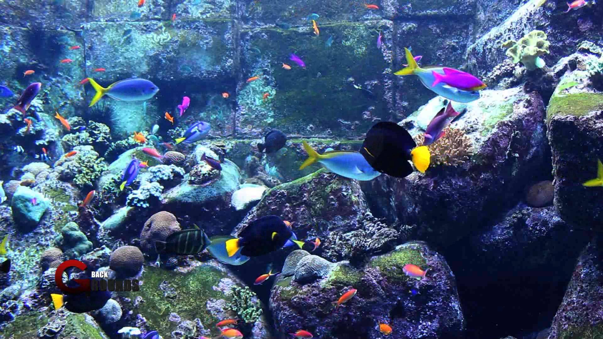 Hd aquarium wallpaper wallpapersafari for Desktop fish tank