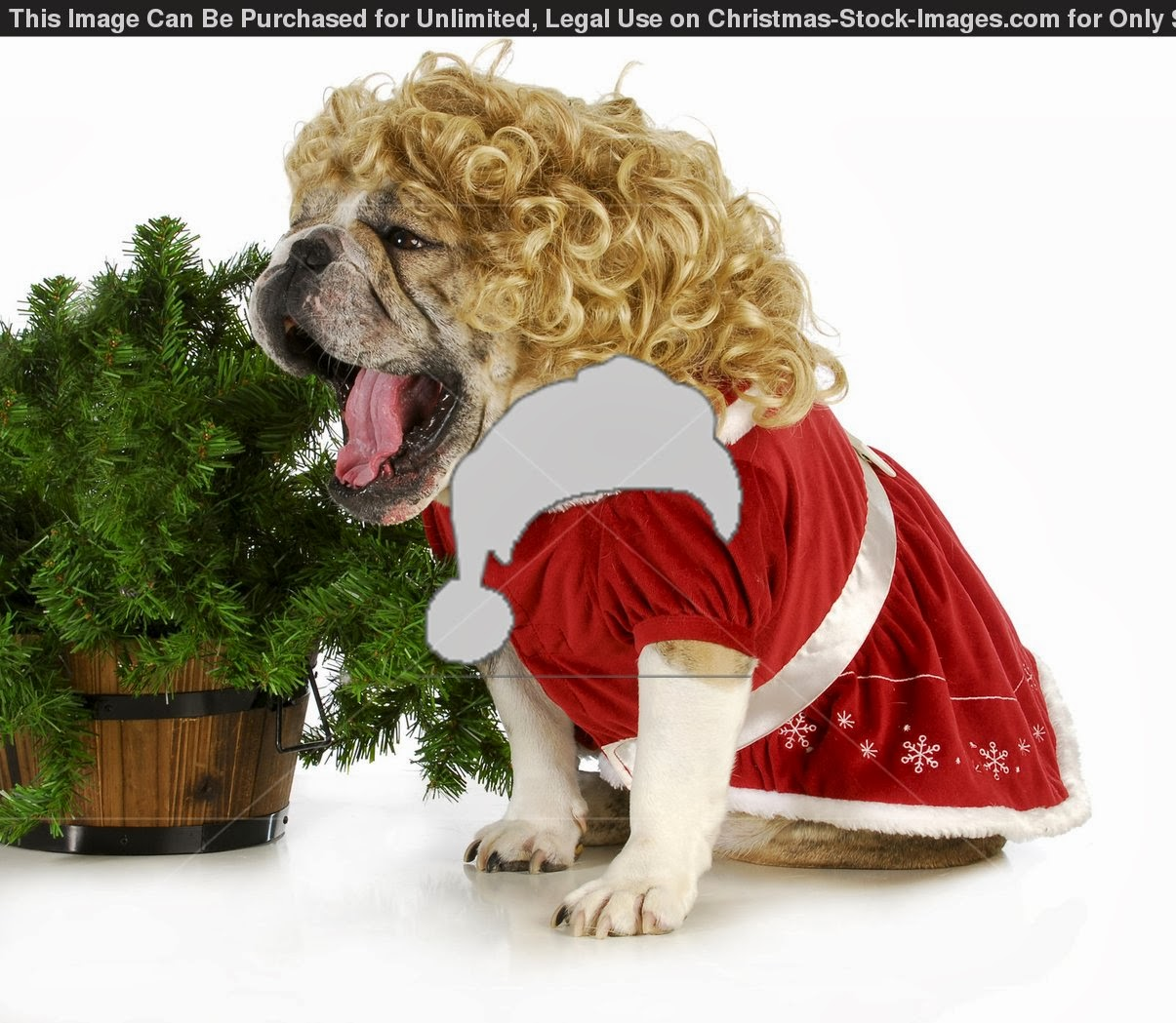 All new wallpaper My Christmas gift for dog lovers wallpaper 1205x1049