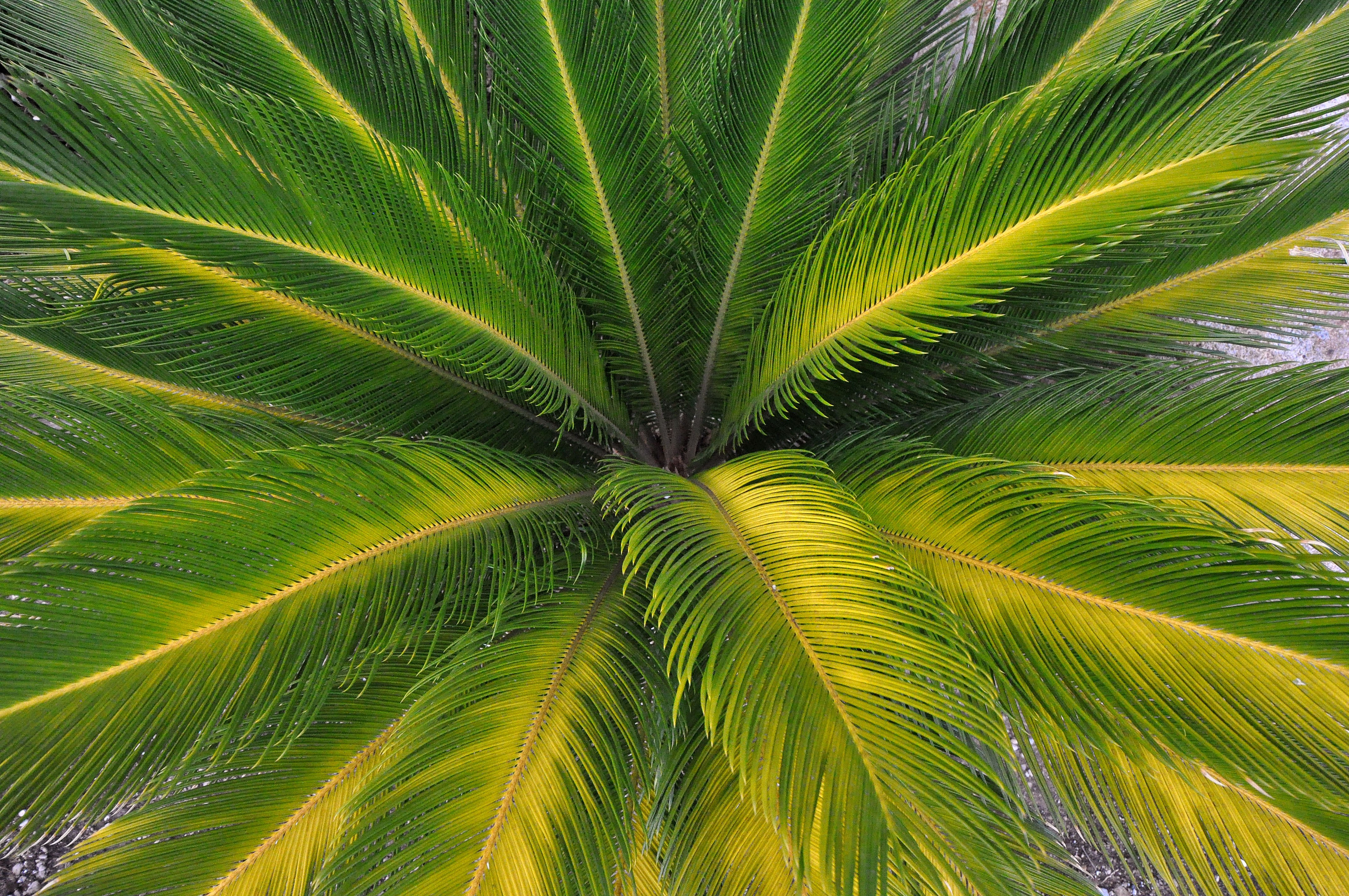 Palm leaves nature wallpaper 4288x2848 247281 WallpaperUP 4288x2848