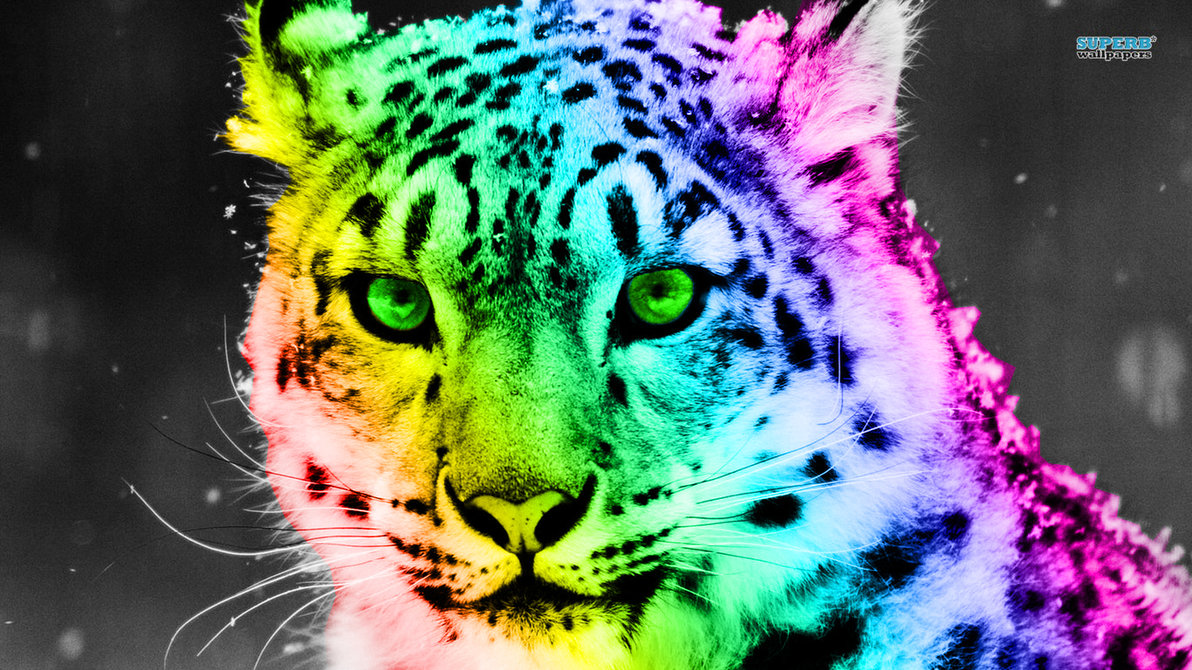 Colorful Leopard Wallpaper wallpaper Colorful Leopard Wallpaper 1192x670