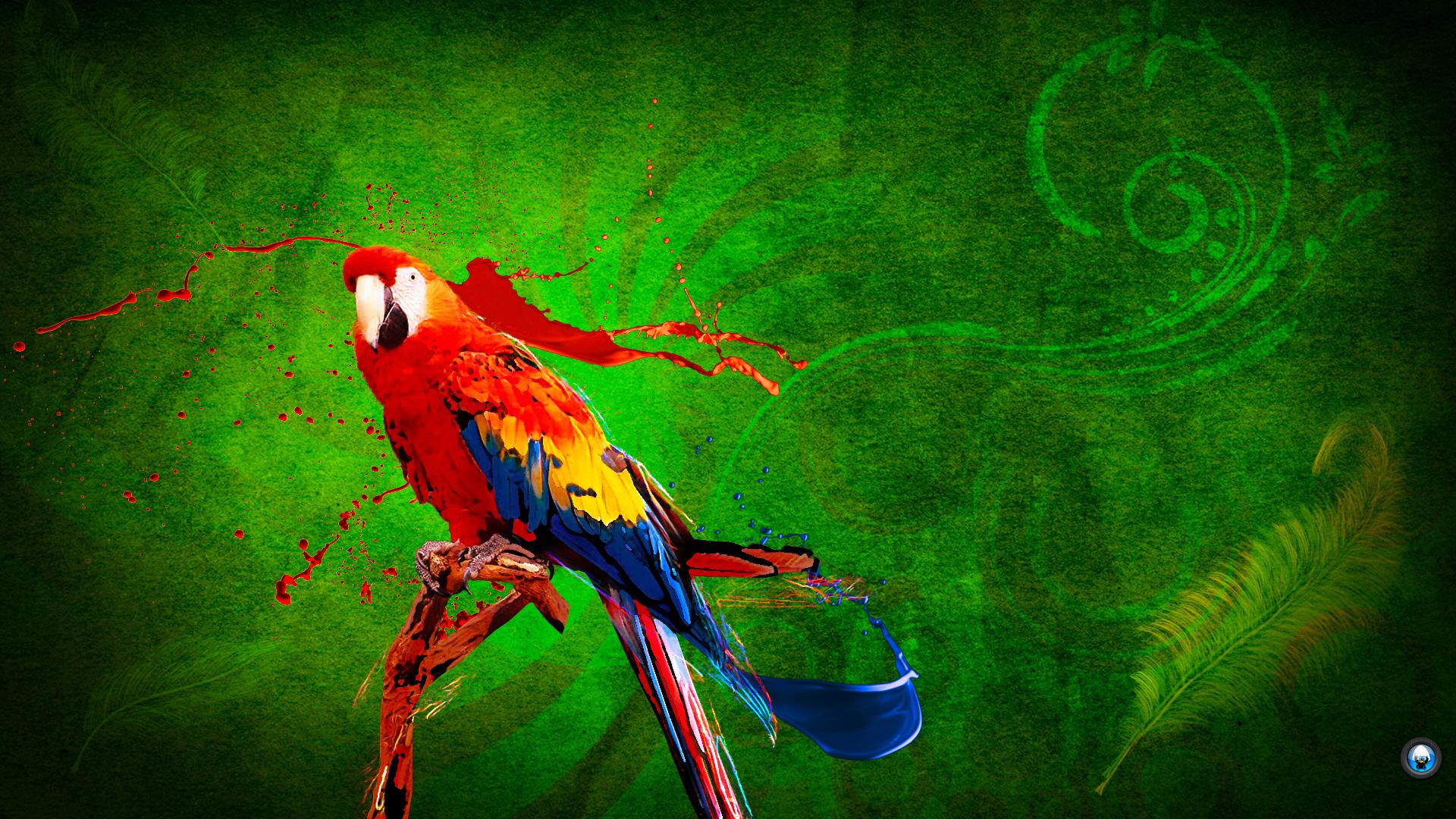 Parrot HD wallpaper 1920x1080 1   hebusorg   High Definition 1920x1080