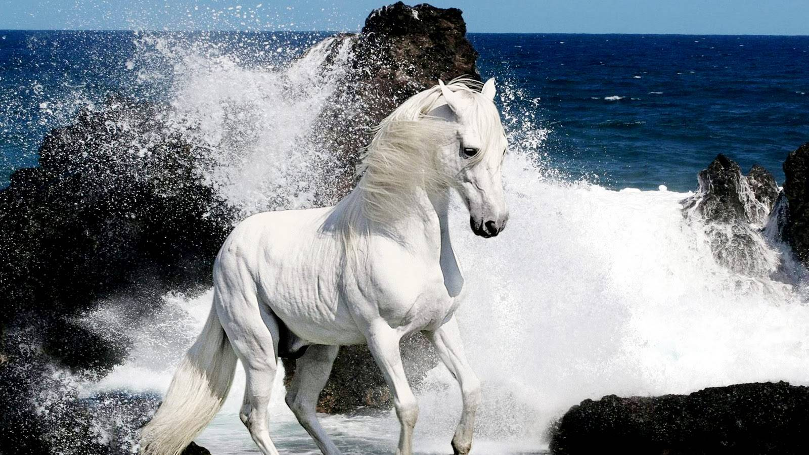 White Horse and Waves   Horses Wallpaper 1600x900