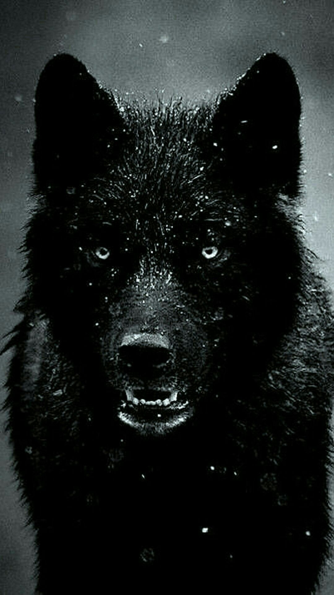 Epic Wolf Hd Wallpapers Hupages Download Iphone Wallpapers 1080x1920