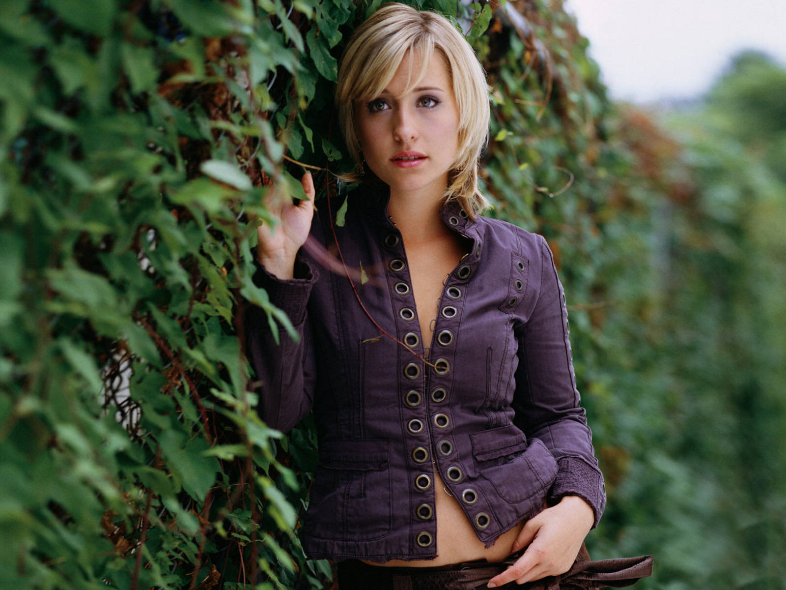 Allison Mack New Hot HD Wallpaper 2013 Hollywood Universe 1600x1200