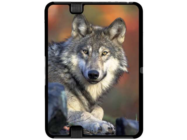 Fall Background   Snap On Hard Protective Case for Amazon Kindle Fire 640x480