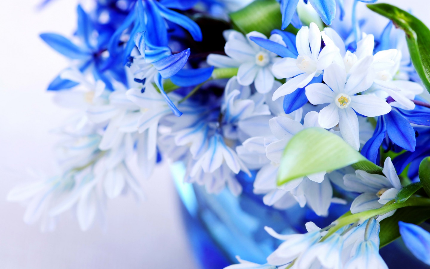 Free Download White Blue Flowers Flowers Wallpaper 33698267