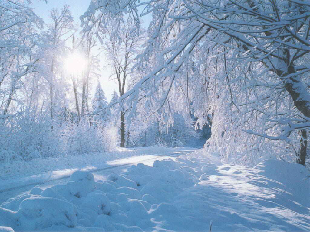 beautiful nature winter wallpaper Wallpaper Express is 1024x768