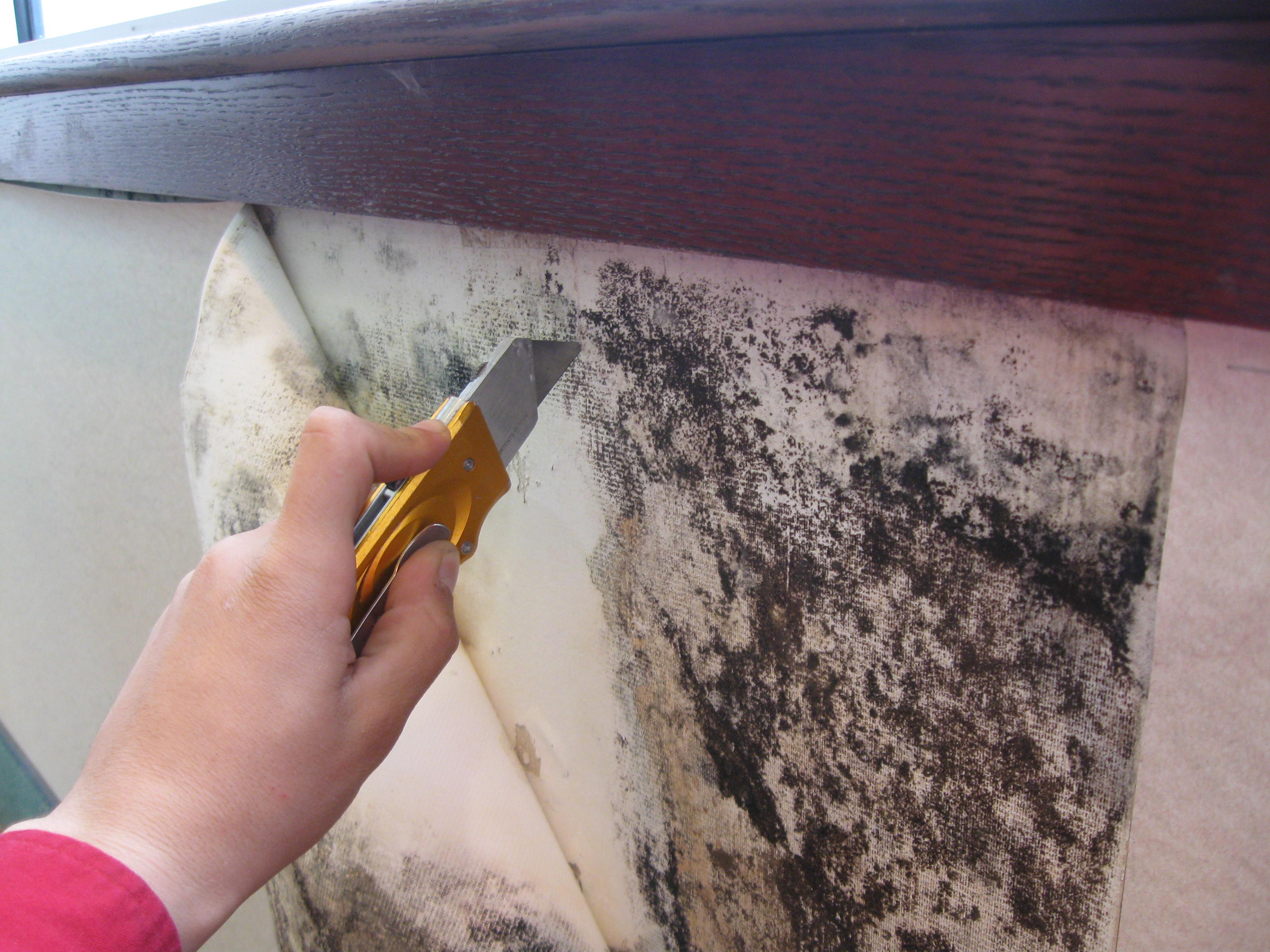 Как вывести плесень на стенах 83