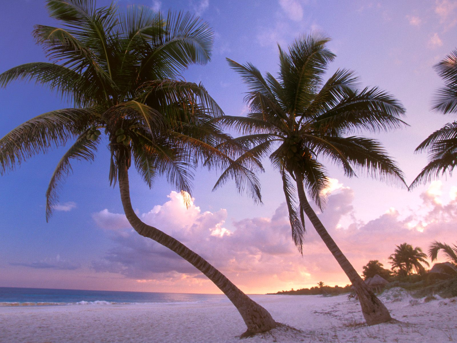 download jamaica beach wallpaper which is under the beach wallpapers 1600x1200