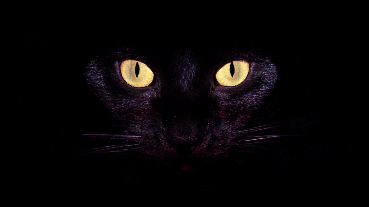 Cool Cat Eyes Wallpaper 2021 1280x720
