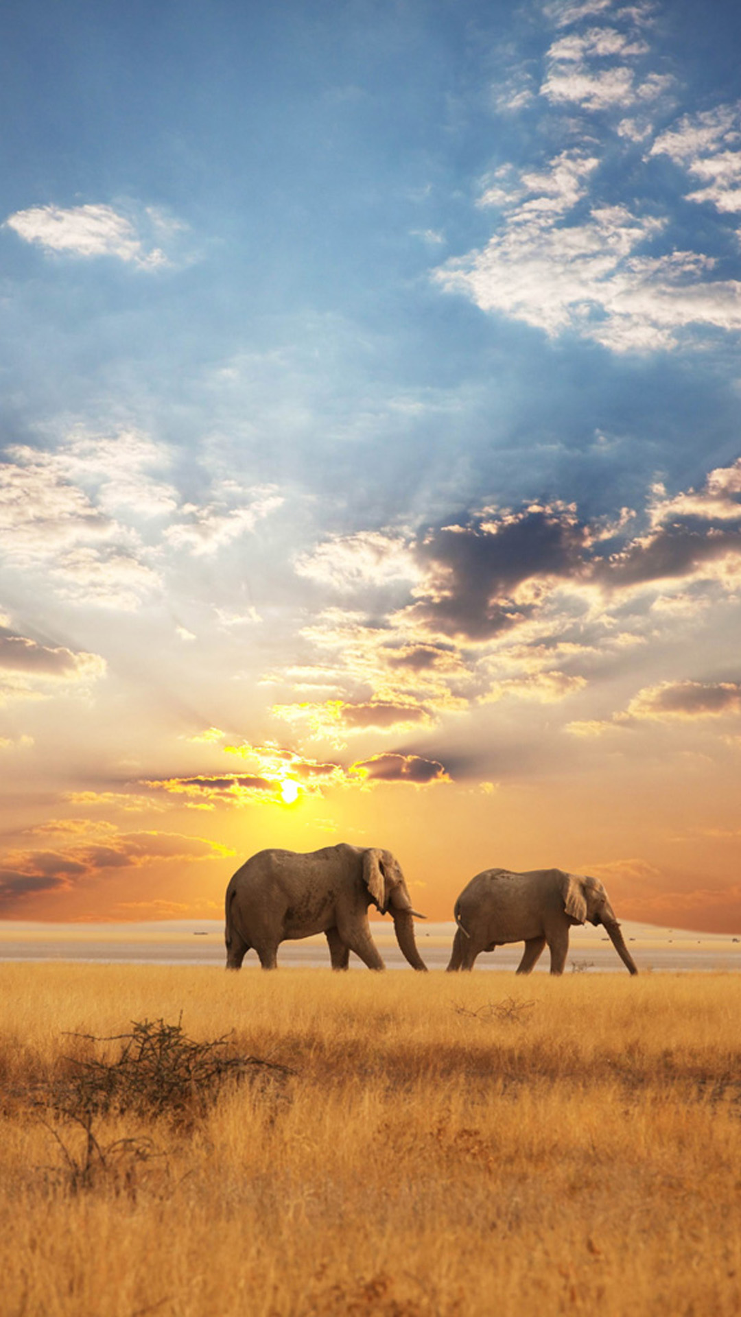 african elephant wallpaper wallpapersafari