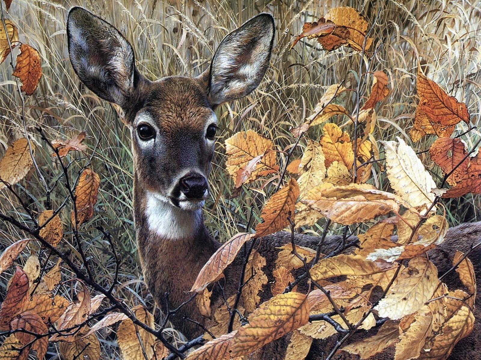 Wallpapers deer wallpapersdeer wallpaperwhitetail deer wallpaper 1600x1200