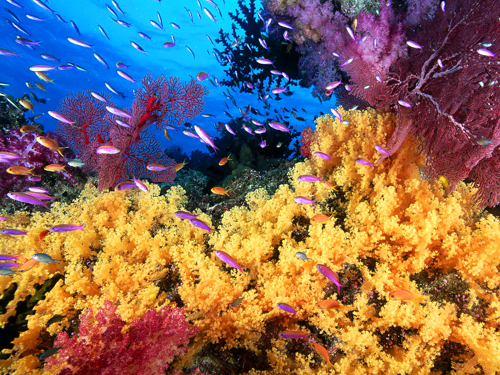 Coral reef life Fish wallpapers 1600x1200