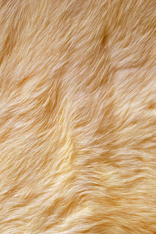 Fur Wallpaper Wallpapersafari