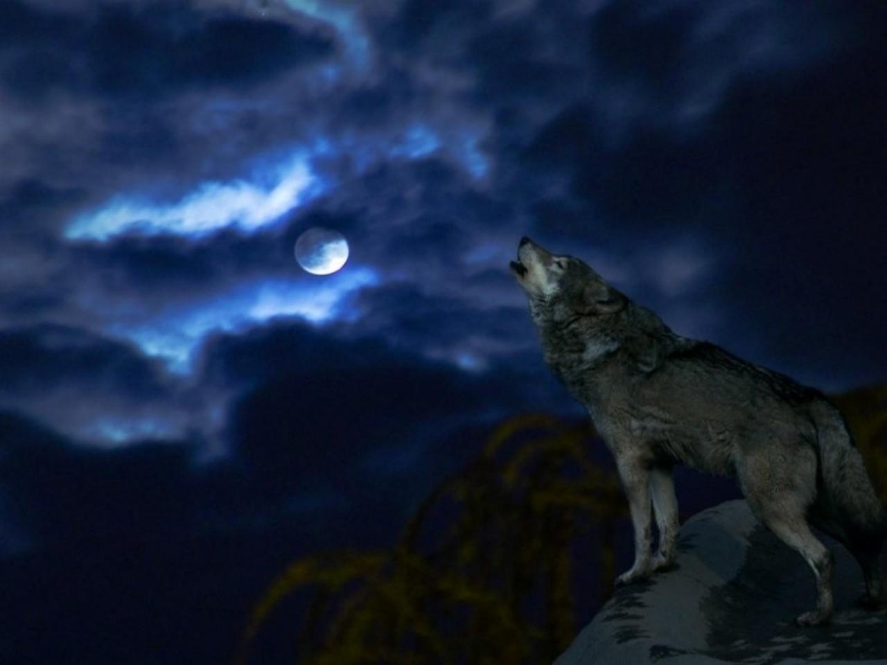 wolf full moon wallpaper wallpapersafari