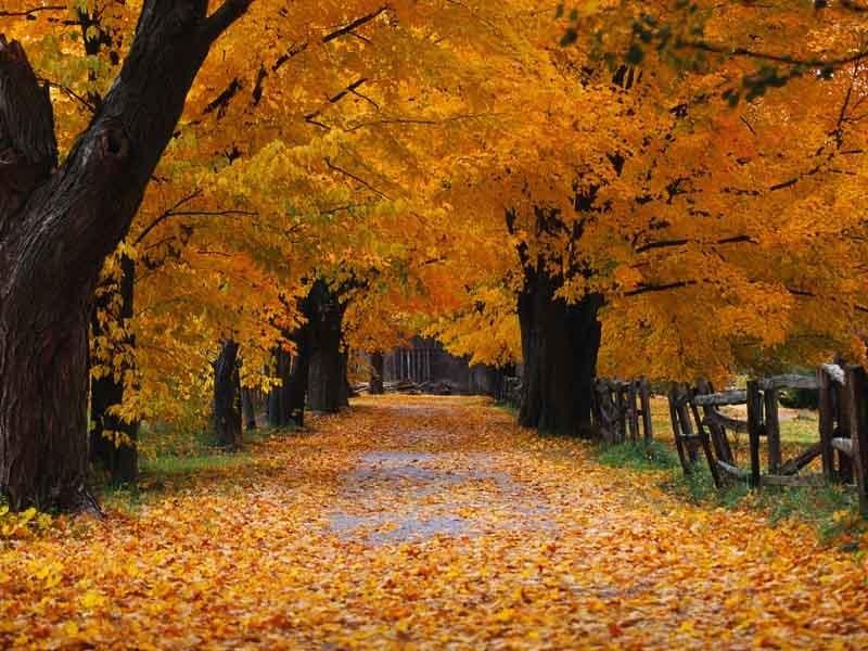 Beautiful Fall Wallpapers   Autumn Wallpaper 15496205 800x600