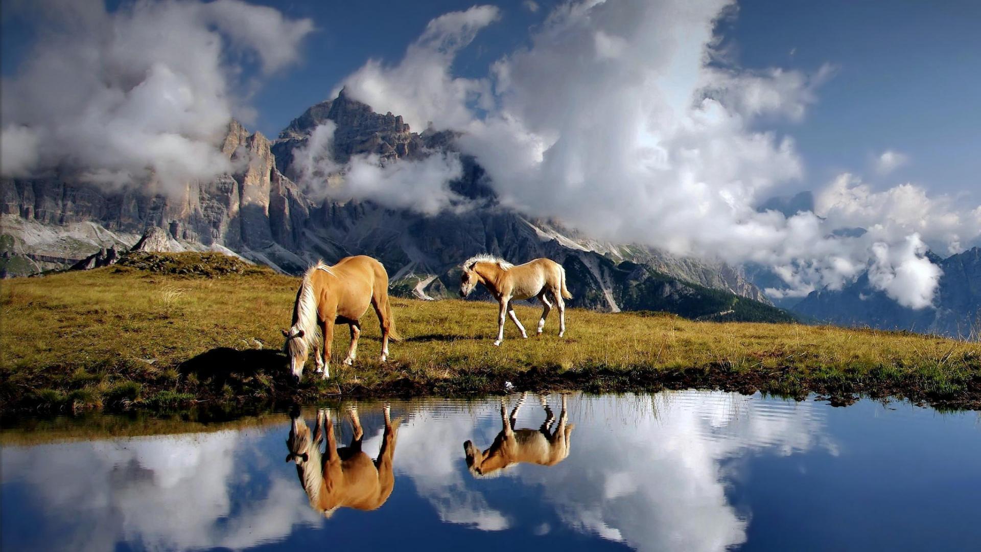 HD Horse Backgrounds Desktop 1920x1080