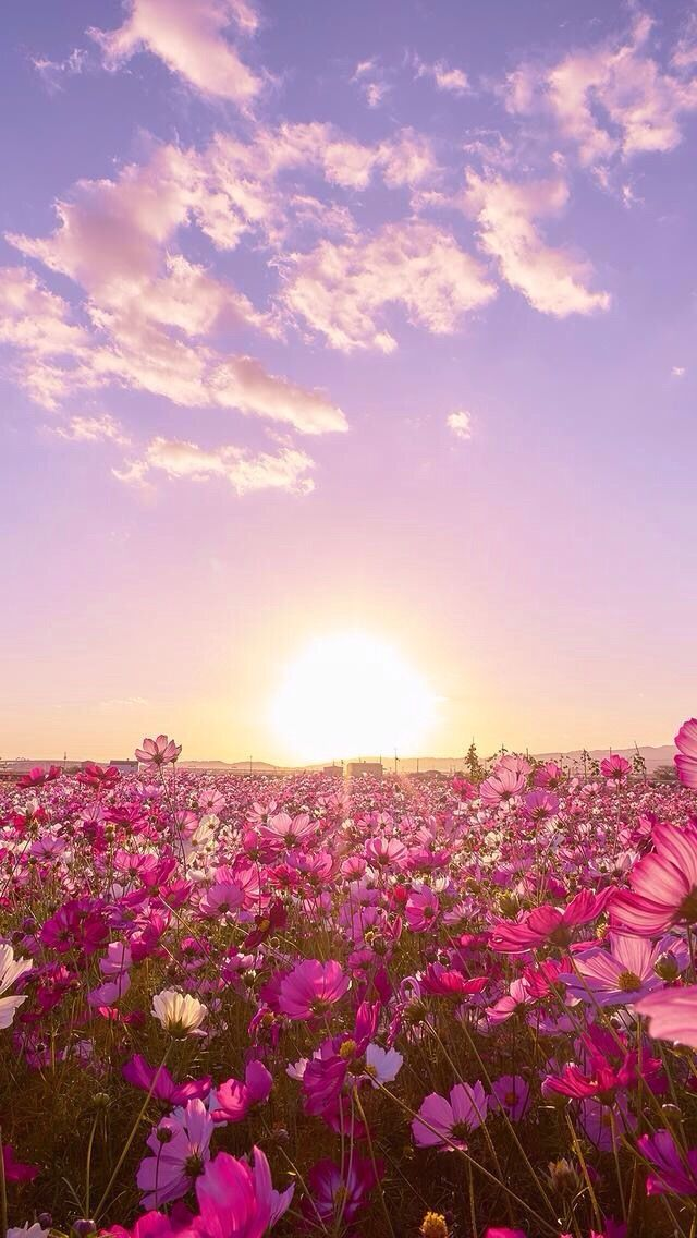 Pink skies and flowers everywhere Wallpaper nature flowers 640x1136