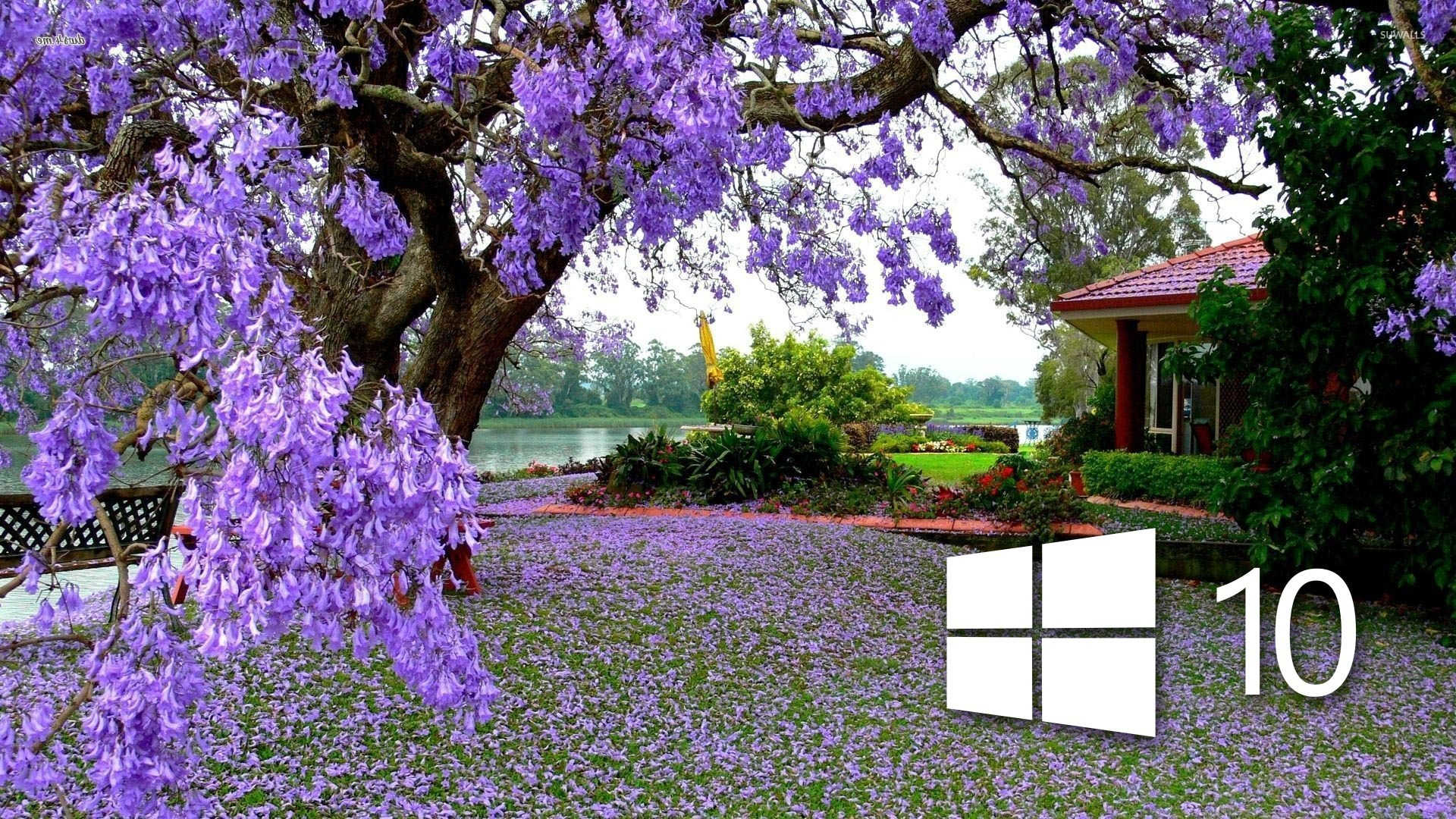 Windows 10 on the purple blossoms wallpaper   Computer wallpapers 1680x1050