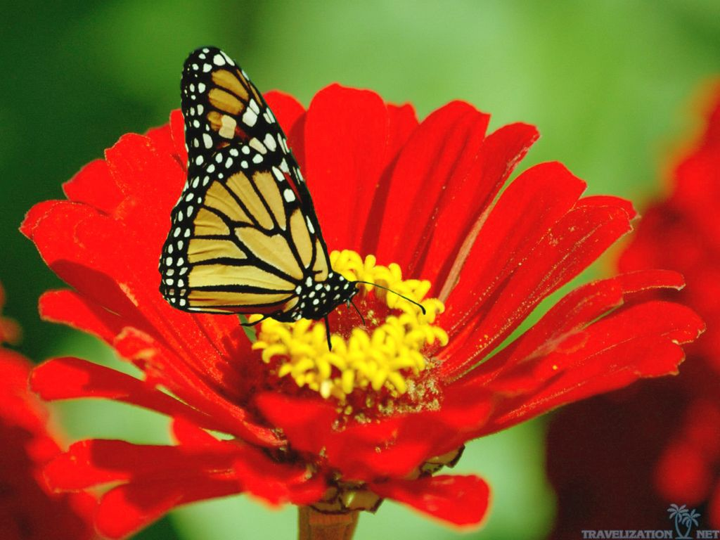 [45+] Free Wallpaper Butterflies and Flowers on ...