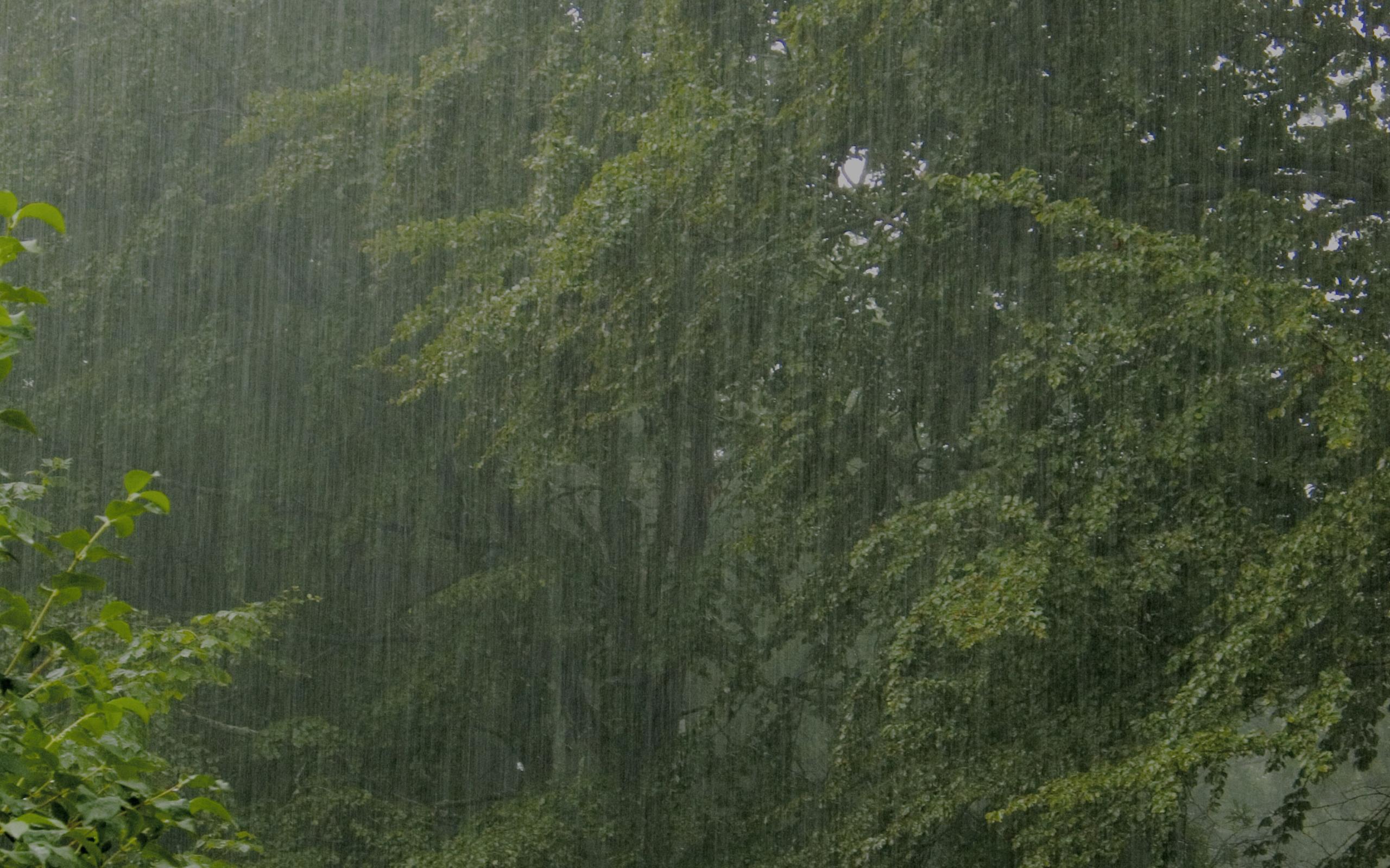 2560x1600px Rainy Forest Wallpaper 2560x1600