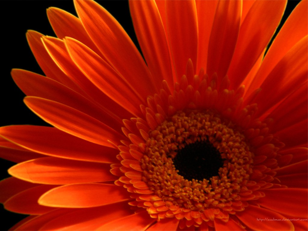 Beautiful Wallpapers gerbera and daisy flower wallpaper 1024x768
