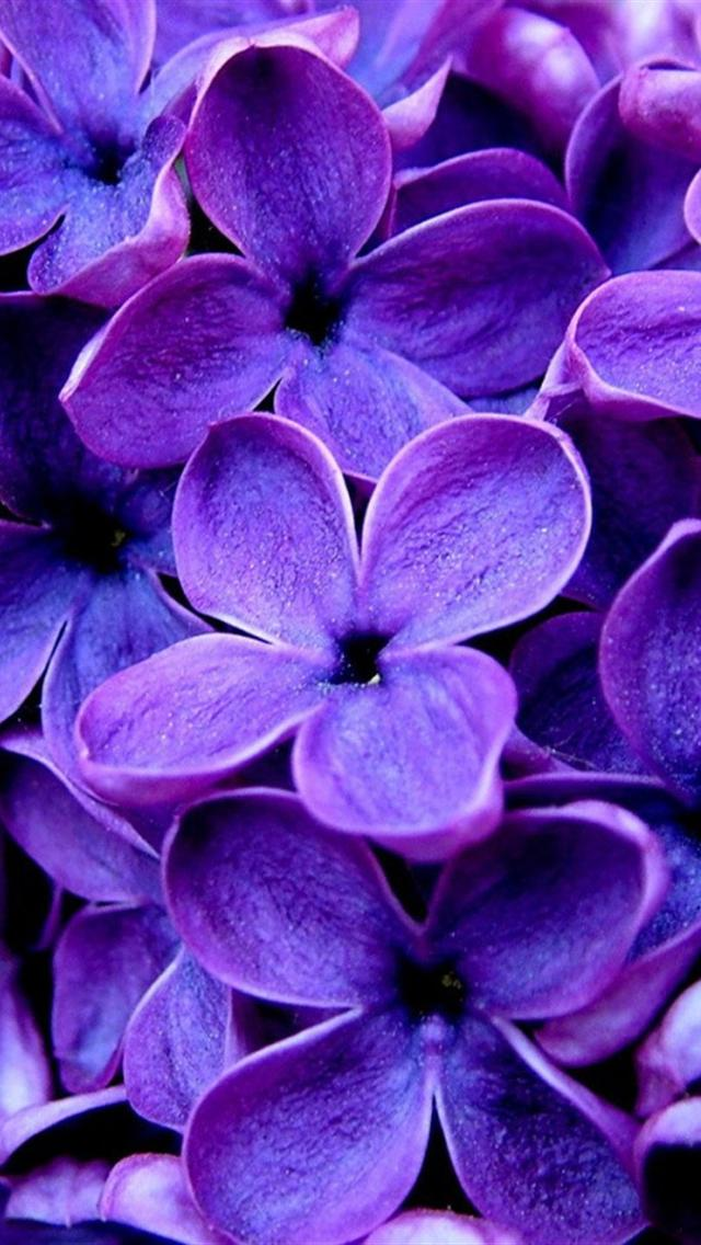 Purple screensavers and wallpaper wallpapersafari - Girly screensavers for iphone ...