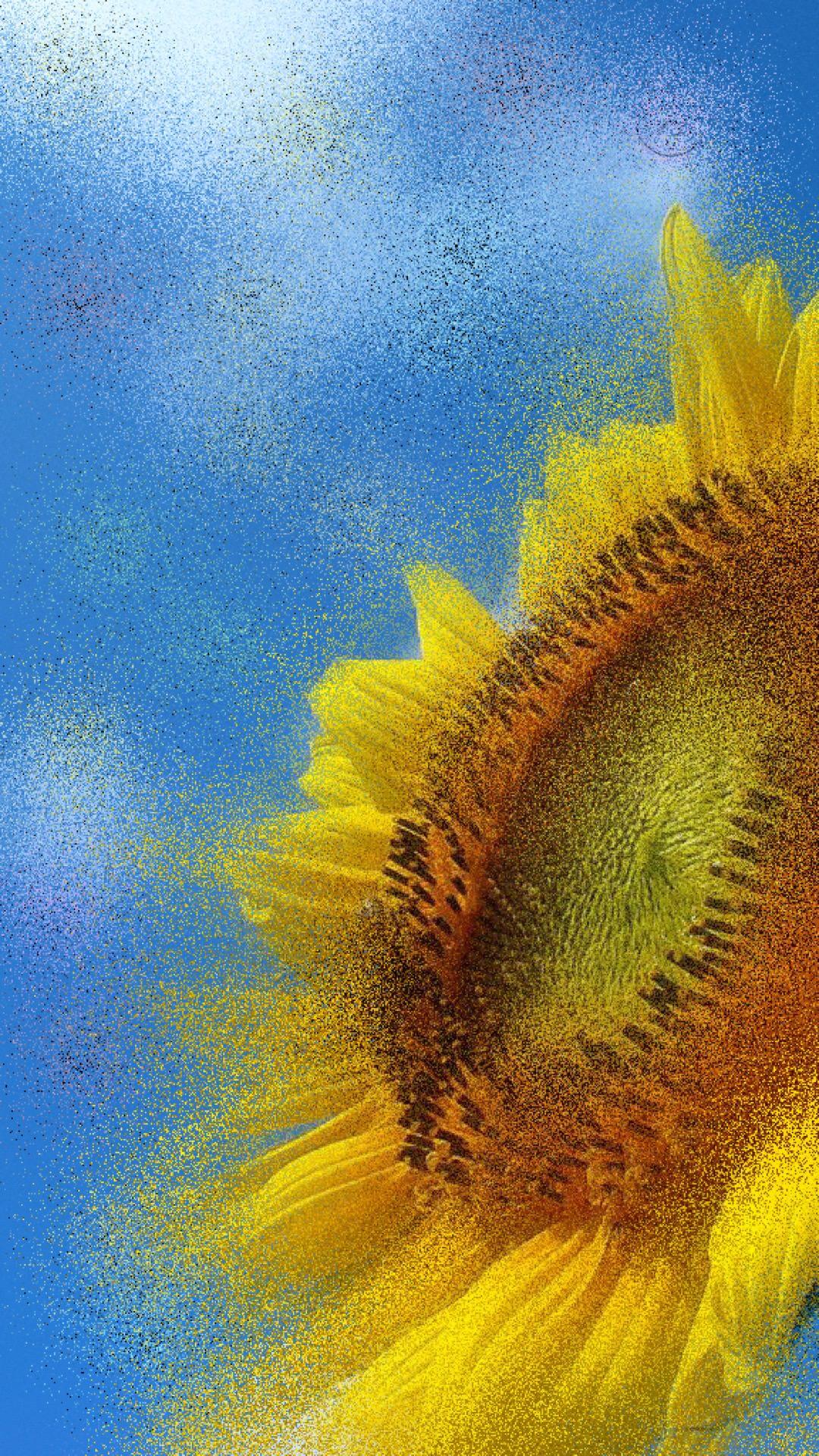Sunflower sunflower wallpapersc iPhone7Plus 1080x1920