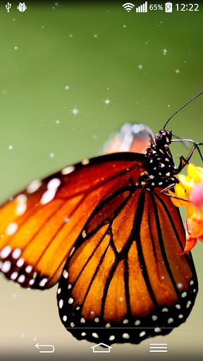 Butterfly Live Wallpaper Screenshot 2 288x512