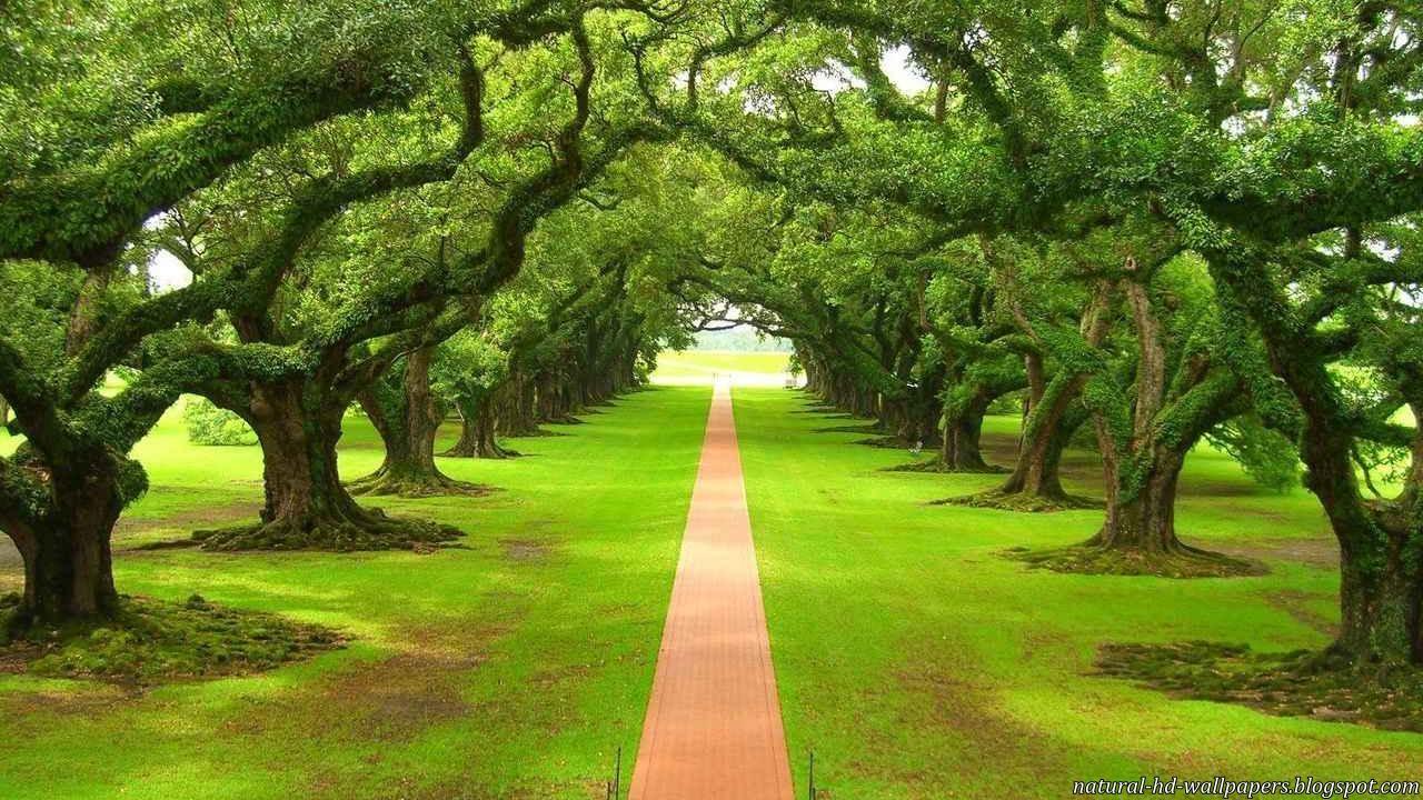 beautiful track between trees beautiful rail track classic track most 1280x720
