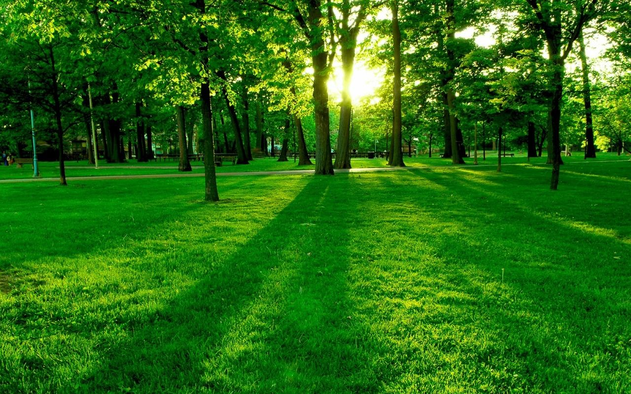 TierraNaturaleza rbol Verde Fondo de Pantalla Fondos De 1280x800