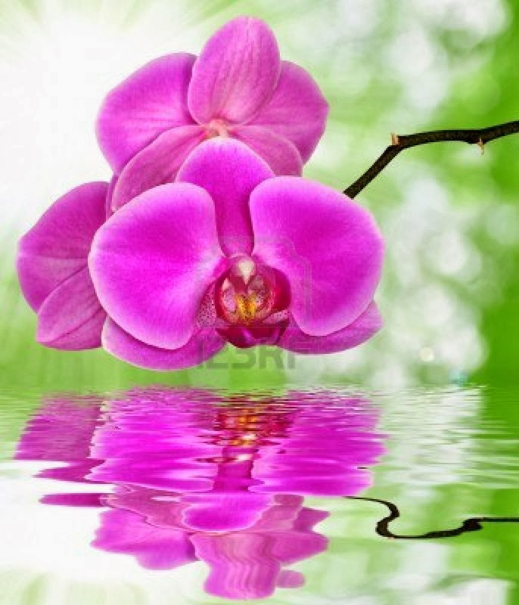 Purple Orchids Wallpaper Download purple orchid on 1029x1200
