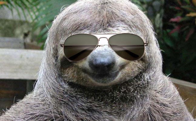 sloth sunglasses wallpaper wallpapersafari