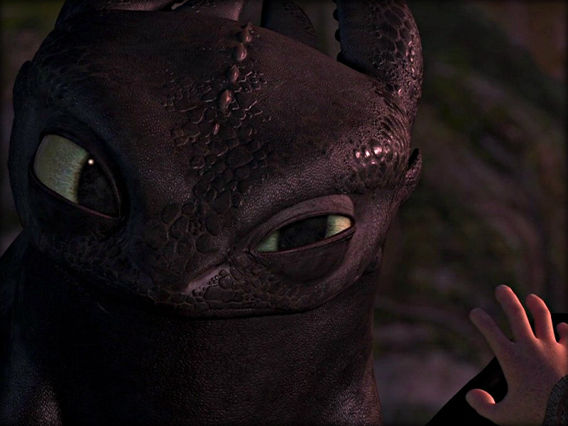 Toothless   Toothless the Dragon Wallpaper 32987033 800x600