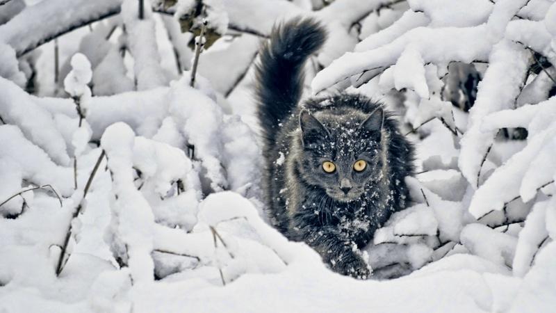 Cats In Winter Wallpaper Wallpapersafari