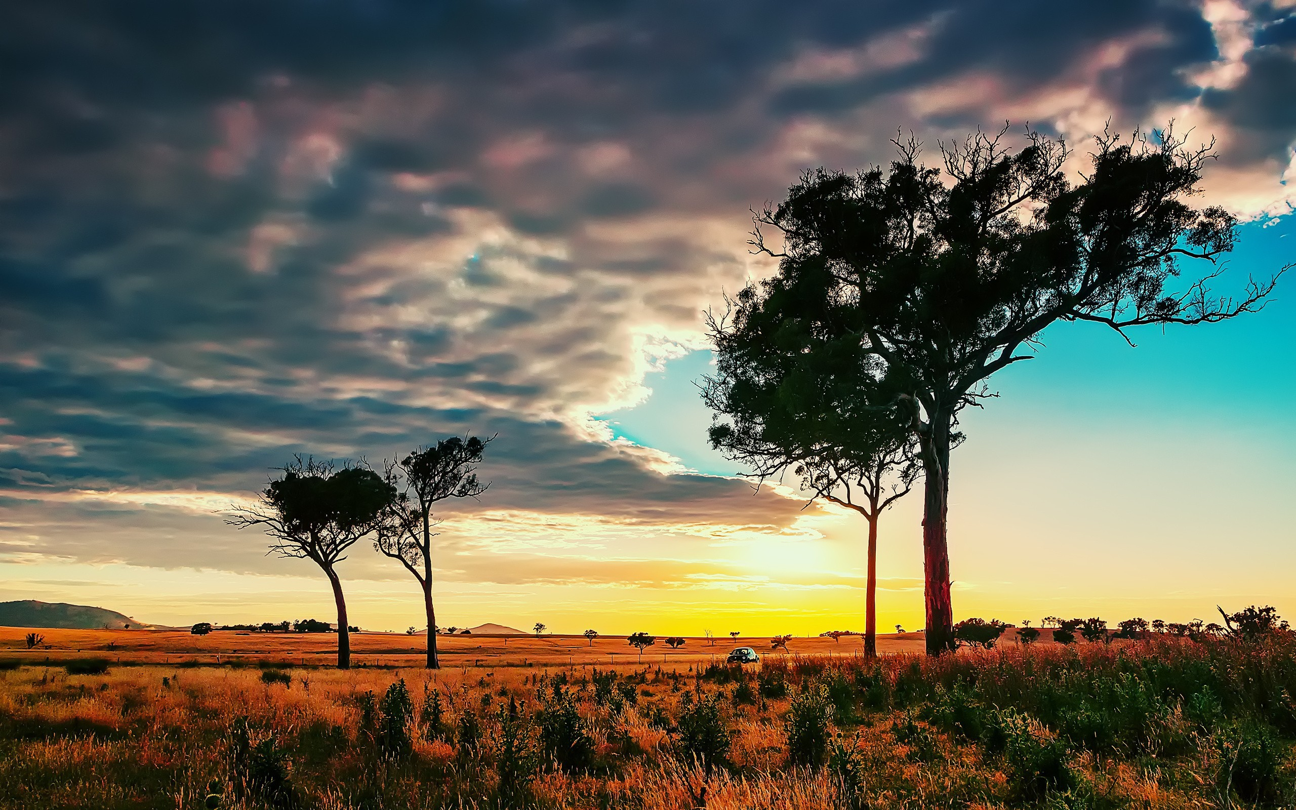 13 African Savanna Wallpapers And Images Pictures Photos 2560x1600