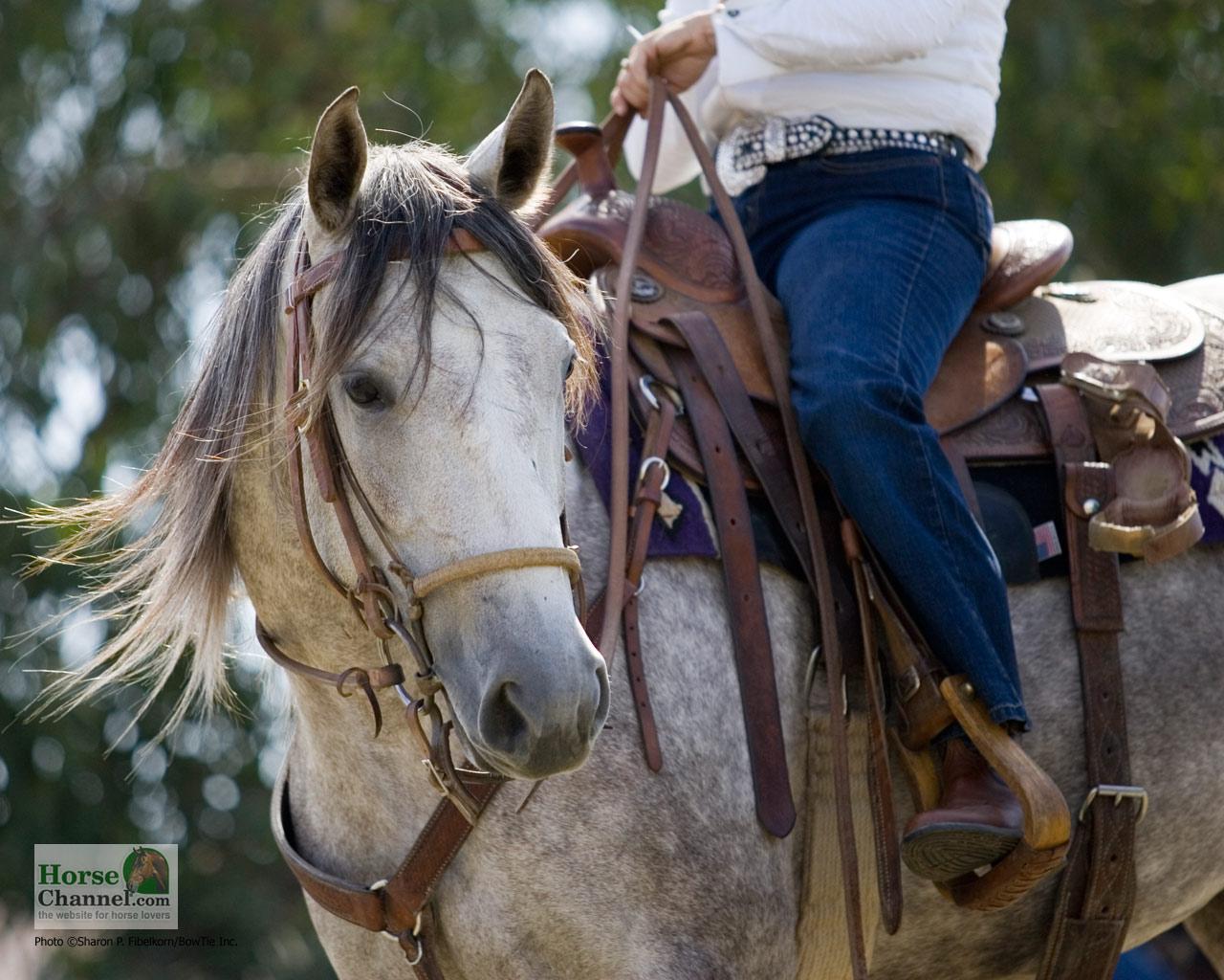 Horse Ranch Wallpaper - WallpaperSafari