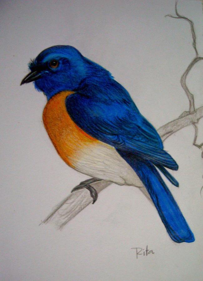 Blue Bird by Rita Fernandes 651x900