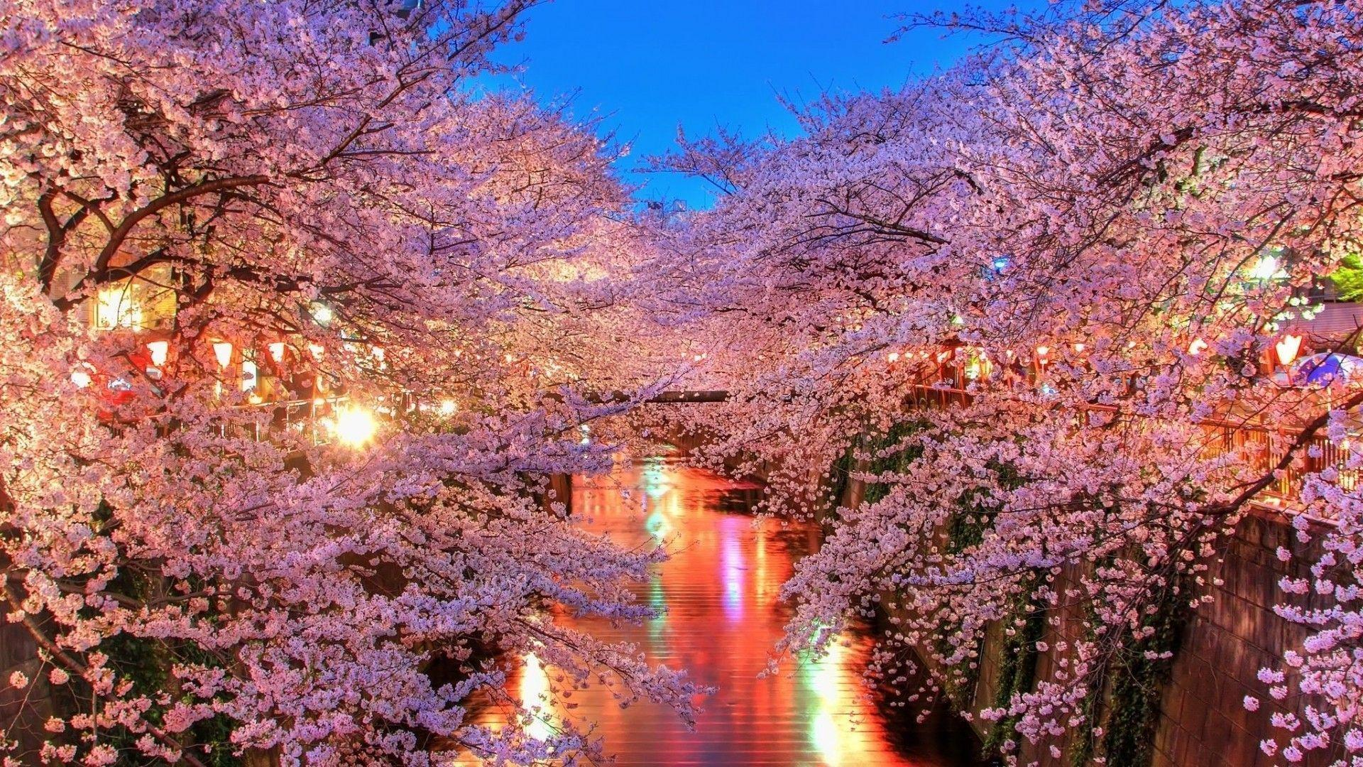 Cherry Blossom Desktop Backgrounds 1920x1080