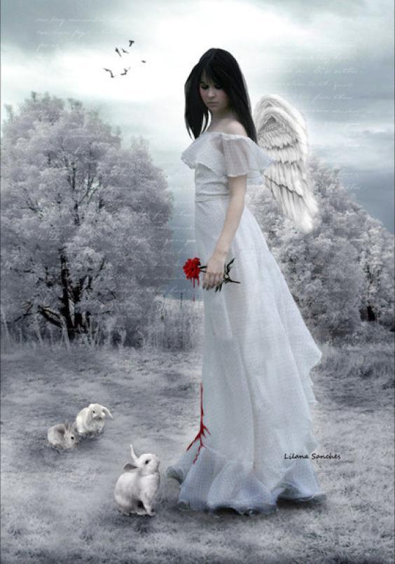 Angel Wallpaper 564x805