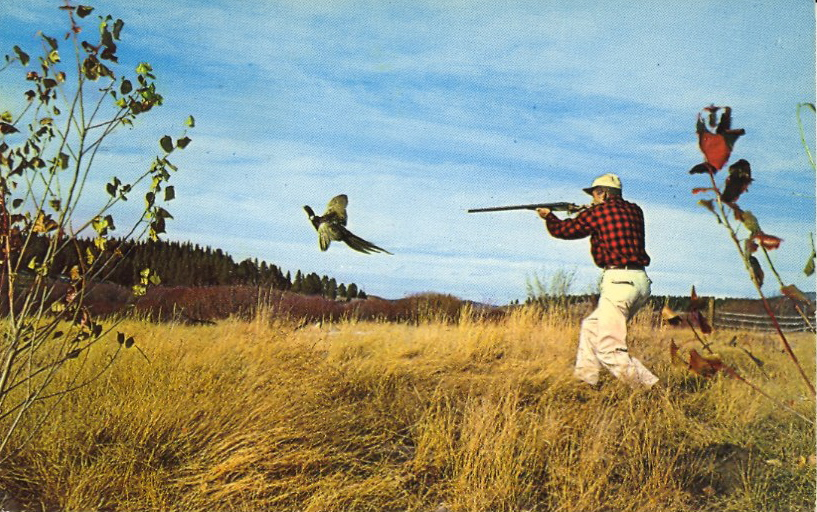 pheasant hunting pictures - HD 2500×1613