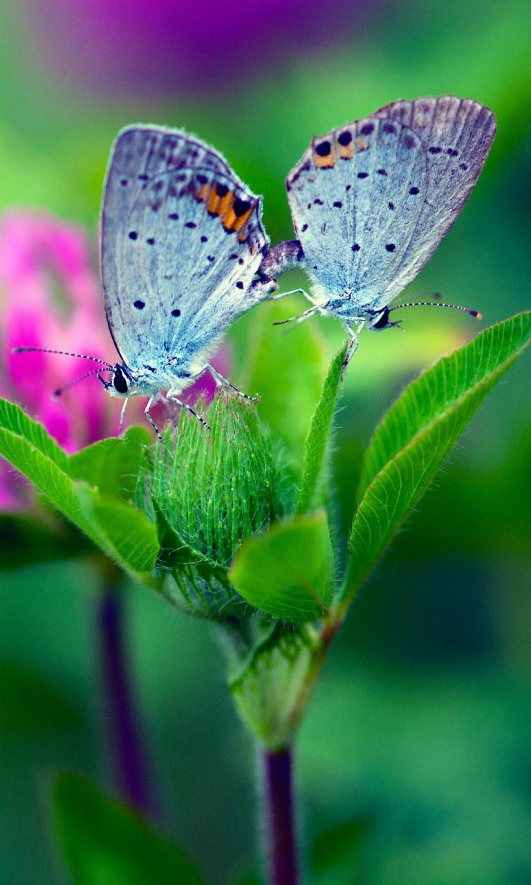 Butterfly Flower wallpaper Desktop iPhone Tablet 768x1280