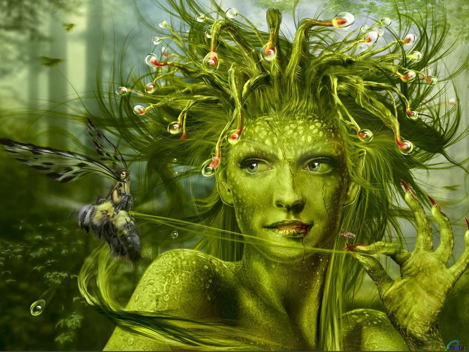 Wallpaper green fairy The Carnivorous Sundew Fairy by Doodledy 1600x1200
